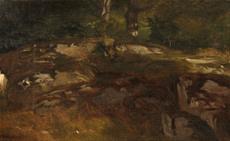 Lesní mýtinka s kameny