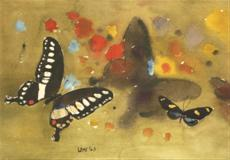 Barvy křídel