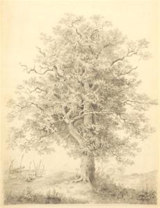 Krajina se stromem