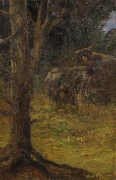 Lesní scenérie