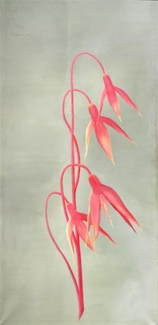 Růžové zvonky